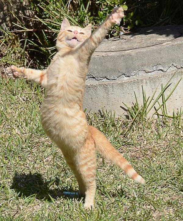 Popolare Piccoli gattini crescono | Il Gatto senza Stivali ZA67